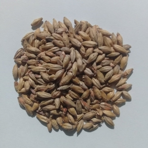 Foto do produto Malte Munich Dark Viking Malt 100g